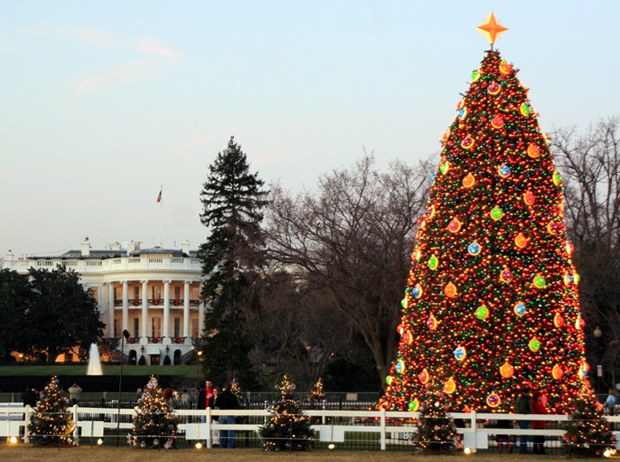 image of white house Christmas tree